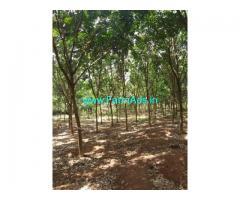 1.5 Acre Farm Land For Sale In Chelakkara