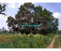 6.5 acres Farm land with house on rent Hassan