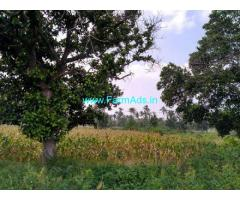 6.5 Acre Agriculture Land For Rent In Mavanuru