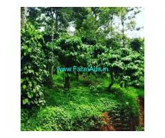 4 Acre Coffee Land for Sale Near Chikmagalur