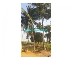 8.60 Acre Agriculture Land for Sale Near Nindra