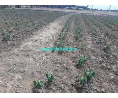 6 Acres Agriculture Land For Sale Near Anthiyur