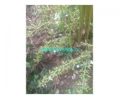 2.50 Acre Farm Land for Lease Near Mullakanam