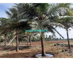 1.50 Acre Farm Land for Sale Near Udumalaipettai