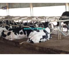 127 Acre Farm Land for Sale Near Eduluru