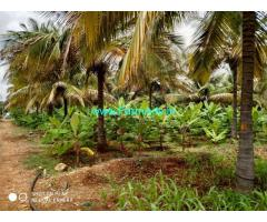 2.13 Acres Coconut farm Land for sale at Chikkanayakanahalli