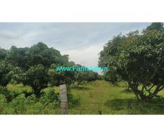3 Acres Mango farm for sale at Kuduru, near Nelamangana