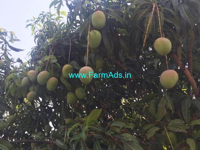 1.5 Acres irrigation farm land for sale near solur byrapura