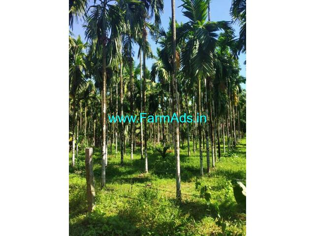 3 acre agriculture land in vittla. Arecanut and coconut farm land.