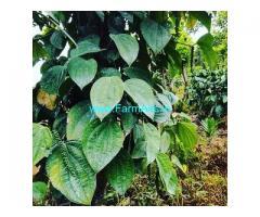 20 Acre Coffee Land for Sale Near Balehonnur
