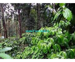20 Acre Coffee Land for Sale Near Madikeri