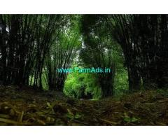 35 Acre Land for Sale Near Madikeri