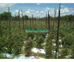 11 Acre Farm Land for Sale Near Madanapalli