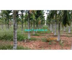 5 Acres arecanut plantation for sale near Hiriyur