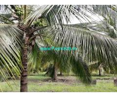 1.5 Acre Farm Land for Sale Near Peryapatti