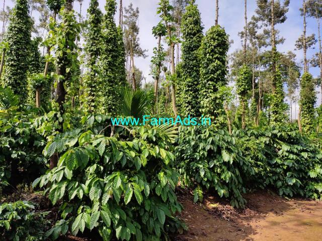 2.5 acre well maintained robusta coffee for sale Sale in mudigere