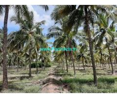 10 Acre Farm Land for Sale Near Palladam