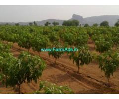 100 Acres Of Mango Farm Land For Sale In Gudur