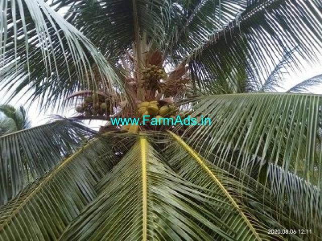 1.33 Acre Farm Land for Sale Near Udumalaipettai