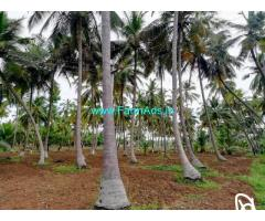 10 acres good income and investment farm land sale dindigul