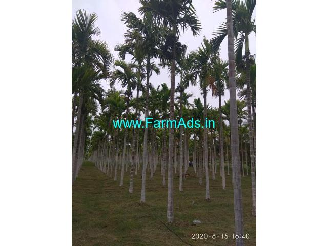 8.5 acre well maintained areca plantation for Sale in sira