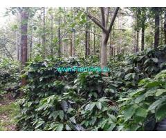8 Acre Coffee Land for Sale Near Aldur