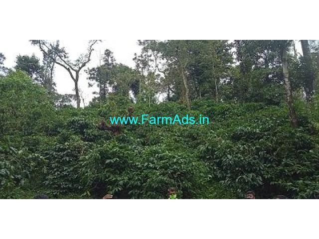 14 Acre Coffee Land for Sale Near Sakleshpur