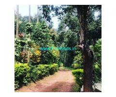 40 Acre Coffee Land for Sale Near Chikmagalur