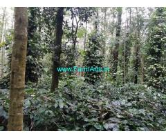 3.5 Acre Coffee Land for Sale Near Mallenahalli