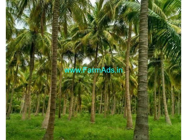 2 Acre Farm Land for Sale Near Belthangady