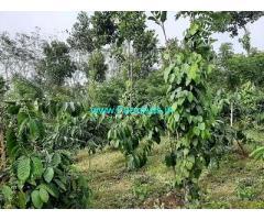 3.10 Acre Farm Land for Sale Near Mananthavady