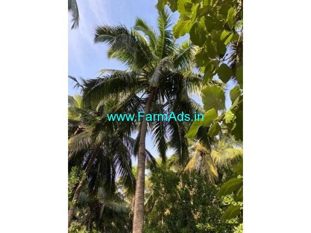 35 Cent Farm Land for Sale Near Thazhakudy