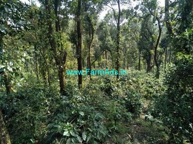 12 Acre Farm Land for Sale Near Mudigere