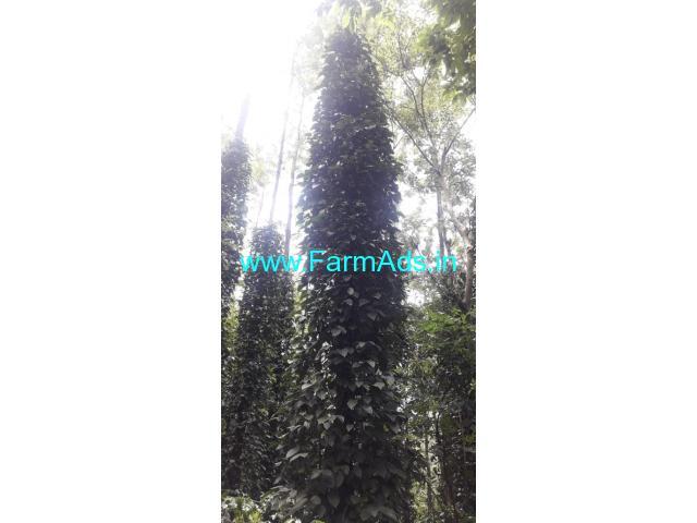 8.5 Acre Farm Land for Sale Near Chikmagalur