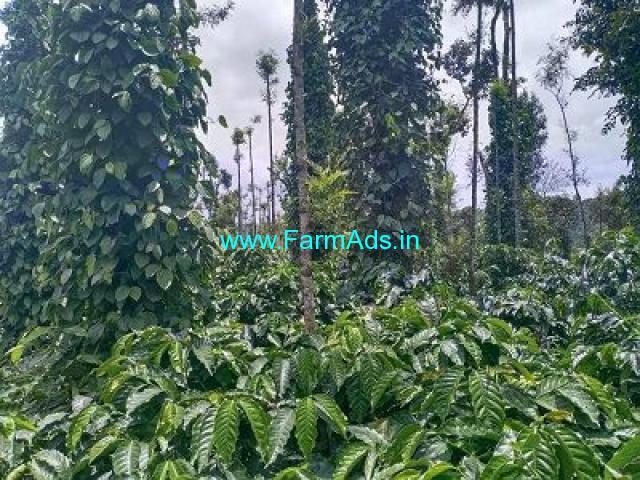 1.5 Acre Coffee Estate Farm Land for Sale Near Mudigere.