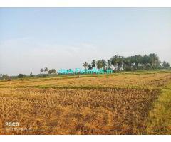 3.5 Acre Farm Land for Sale Near Suramangalam