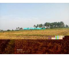 3.5 Acre Farm Land for Sale Near Kalpakkam