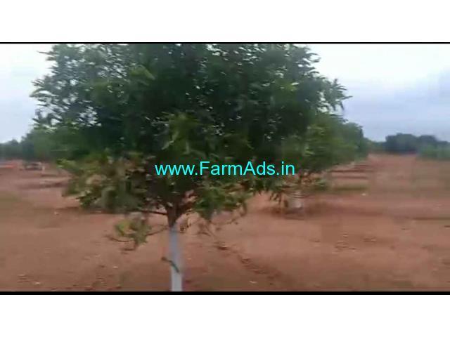 3.36 Acres Mango garden for sale. Mamidi Thotam at Pargi. Chevella.