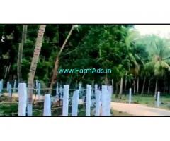 15 Acres Agriculture Coconut Farm Land For Sale Karam Bhai Tirunelveli