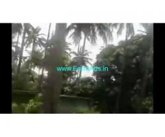 15 Acres Agriculture Mango farm Land For Sale Puliyarai Tenkasi.