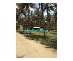 Coconut farm 3 acer for sale. Senjerimalai, Thruppur.