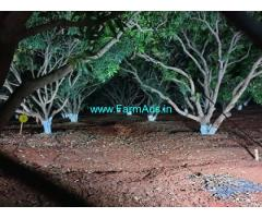 53 Acres Mango Farm Land for Sale near Kondurg
