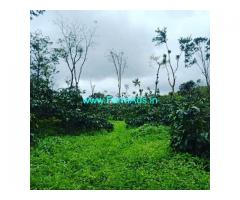 3 Acre Coffee Land for Sale Near Sakleshpur