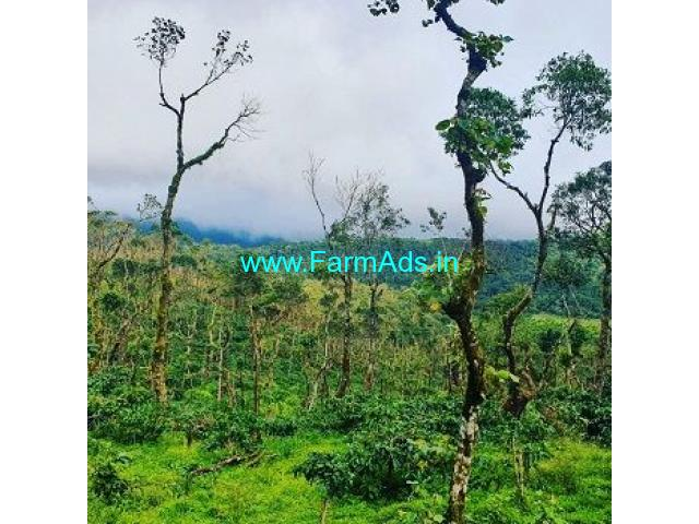 85 Acre Coffee Land for Sale Near Sakleshpur