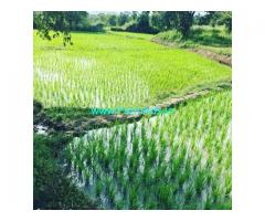 5 Acre Farm Land for Sale Near Belur