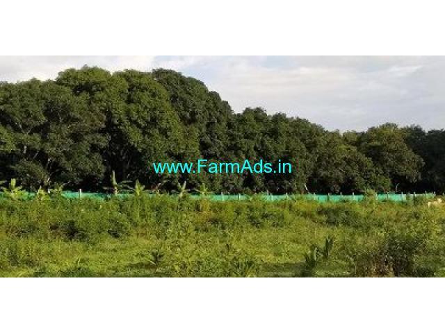 2.5 Acre Farm Land for Sale Near Bodinayakanur