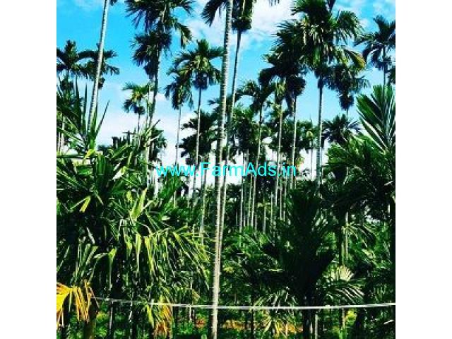 1.30 Acre Farm Land for Sale Near Chikmagalur,Kadur Road