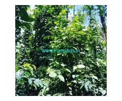 3.25 Acre Coffee Land for Sale Near Ballupet