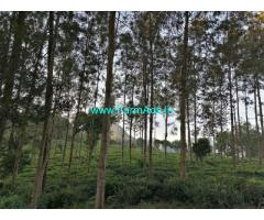 8.50 Acres Tea Estate for sale on Kothagiri to Kodanad Road. Tea Estate