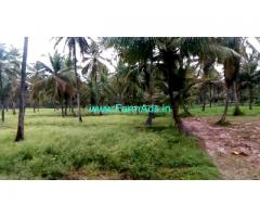 Coconut farm for sale, 5.5 KMS from Sathnur Circle.